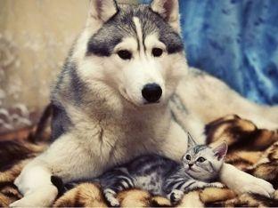 Bashkëjetesa e çuditshme e qenve dhe maceve [foto]