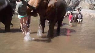 """Turistja zemëron elefantin, por """"fluturon"""" disa metra [video]"""