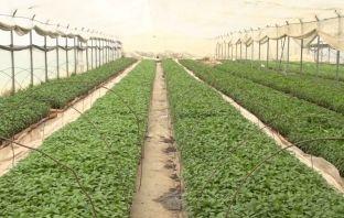 10 fermerë shtimjanë mbështeten për ngritje serrash