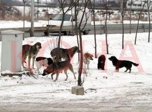 Brenda 24 orësh sulmohen tre fëmijë nga qentë endacakë